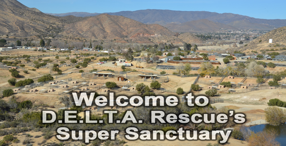 Learn More About The Super Sanctuary