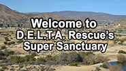Learn more about Delta Rescue's Super Sanctuary facility