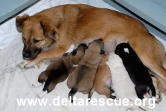 Rescued mom & pups
