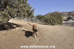 Delta Rescue Animal Sanctuary