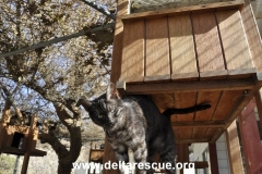 The Delta Rescue Cattery
