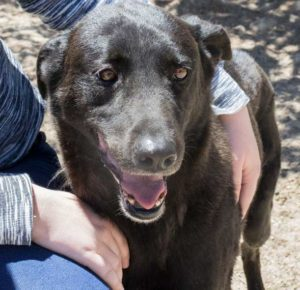 Hercules lives a safe and healthy life at Delta Rescue