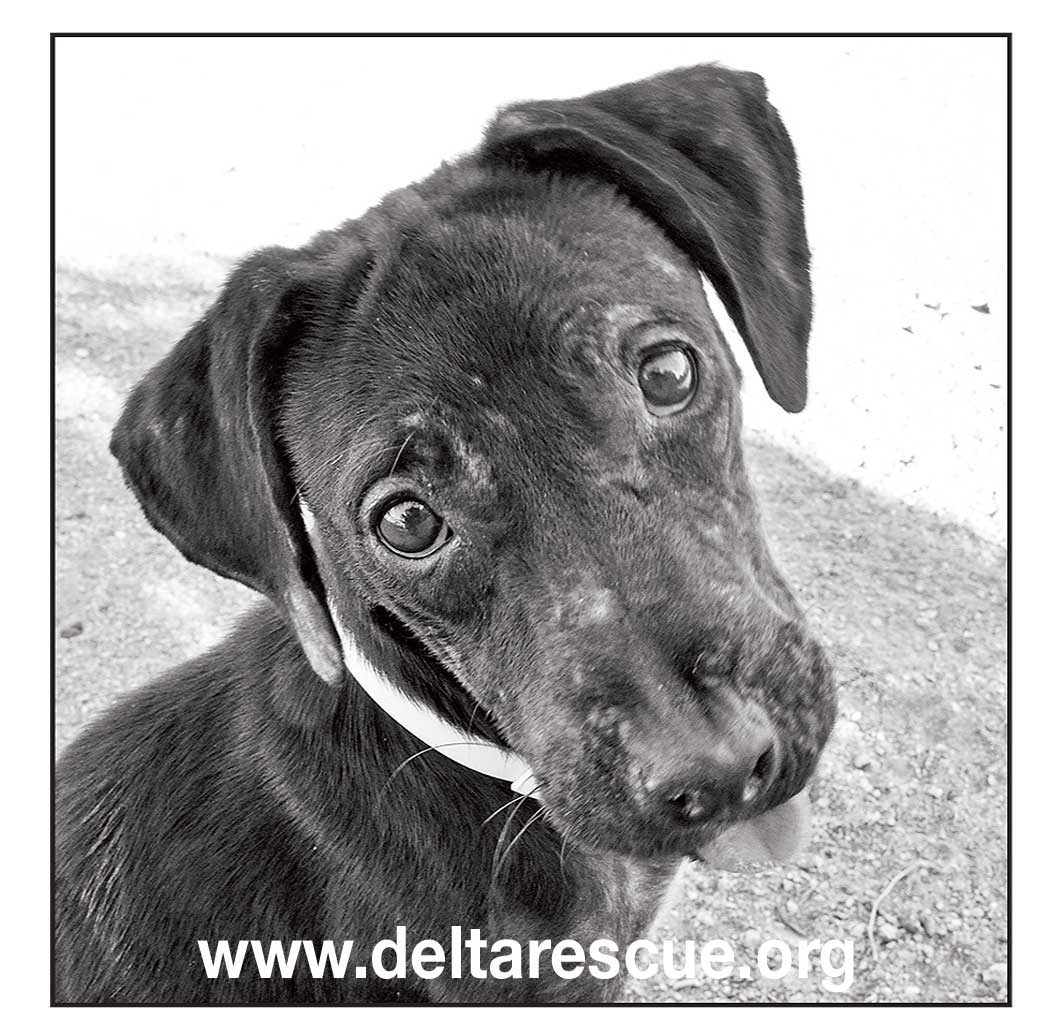 Suzy is now a resident of Delta Rescue animal super sanctuary