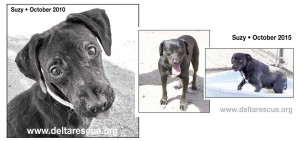 Suzy was rescued in 2010 and now lives at DELTA Rescue animal sanctuary