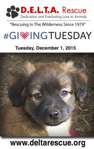 Please donate to Delta Rescue Animal Super Sanctuary
