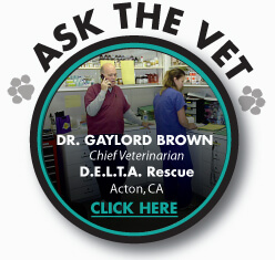 Delta Rescue, Ask The Vet