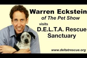 Warren Eckstein of The Pet Show visits Delta Rescue and sees how they save the animals