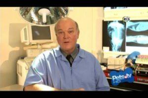 ASK THE PET VET Dr. Gaylord Brown D.E.L.T.A Rescue